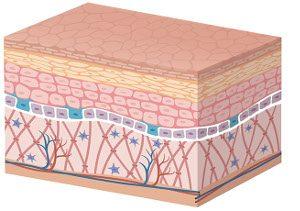 Cellula della pelle in cura dermatologica